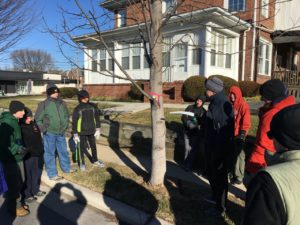 Teaching Boy Scouts to prune trees