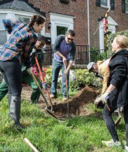 tree planting in towson