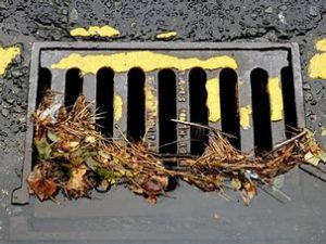 Dead leaves in a storm sewer